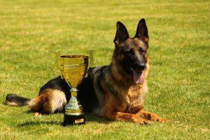 Quinta pohár
