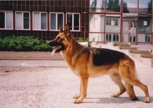 Lutz z Beroliny