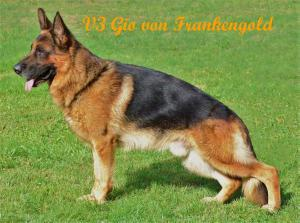 Gio von Frankengold